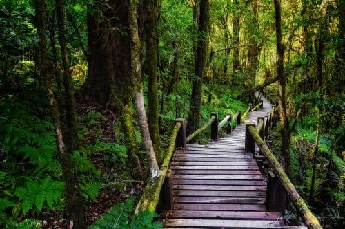 שביל באמצע יער עבות ירוק עד, מורכב מאסדות עץ בחום עמוק, ההשלמה בין צבע העץ למנעד גווני הירוק של העצים, יוצר תמונה הרמונית ונעימה לעין תתן נופך של טבע ורוגע לסלון בסגנון קלאסי