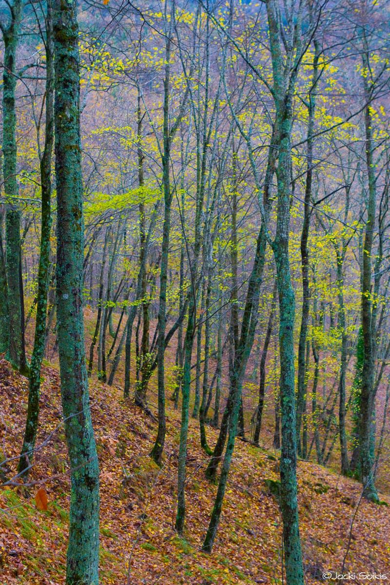 במעלה גבעה מוריקה עצים גבוהים פזורים בצבעי ירוק בוהק וסגול עמוק ומתפרץ ויוצרים תנועה של צבע בטבע. שילוב נהדר עבור סלון צעיר דינמי בסגנון וינטג'.