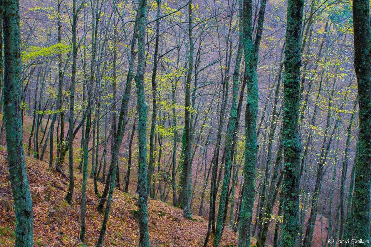 הצבעים מהם עשויים חלומות עירוב פסטלי של סגול לילך, ירוק ליים, וכחלחל ביער עד רוחש סודות ויופי, תמונה משמחת לבית מתוחה על קנבס אמנים.
