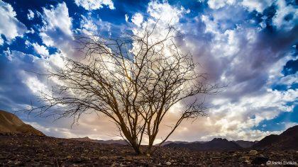 עץ זקוף באמצע המדבר ענפיו החומים בולטים במערומיהם על רקע ההרים הצהובים והשמיים הצבועים בכחול מיסתורי ומכוסים בשמיכת עננים לבנה. תמונת רקע חזקה לסלון בסגנון קלאסי מודרני .