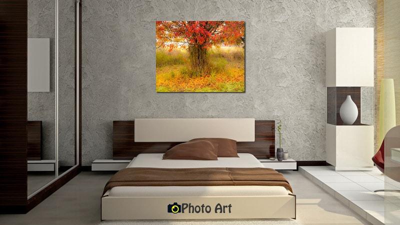 מגוון תמונות מיוחדות לסלון ולחדר השינה