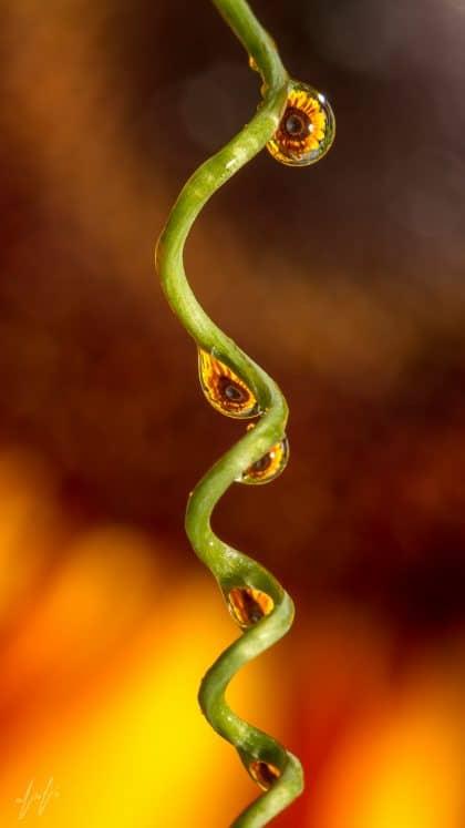 ריסים צהובים ארוכים מקיפים עין חומה של פרח עדין שמשתקף בתוך טיפות מים, הזולגות לאיטן לאורך ענף ירקרק, ברקע אדמוני עם נגיעות כתומות. התנועה שבתמונה מתאימה לסלון מעוצב בסגנון אורבני עם אמירה אישית
