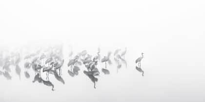 תמונה לבית בשחור לבן של חלום יפני לאווירה שקטה ואלגנטית