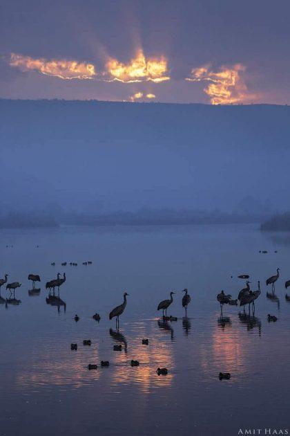 שחר של יום חדש עולה על האגם ומאיר את עופות הבר הטובלות במימיו. קרני השמש הראשונות מגששות את דרכן בין העננים וצובעות אותם בכתום עז, בעוד שאר העולם עטוף עדיין בגוני כחול ואפור ליליים. תמונה מרהיבה למשרד ולסלון