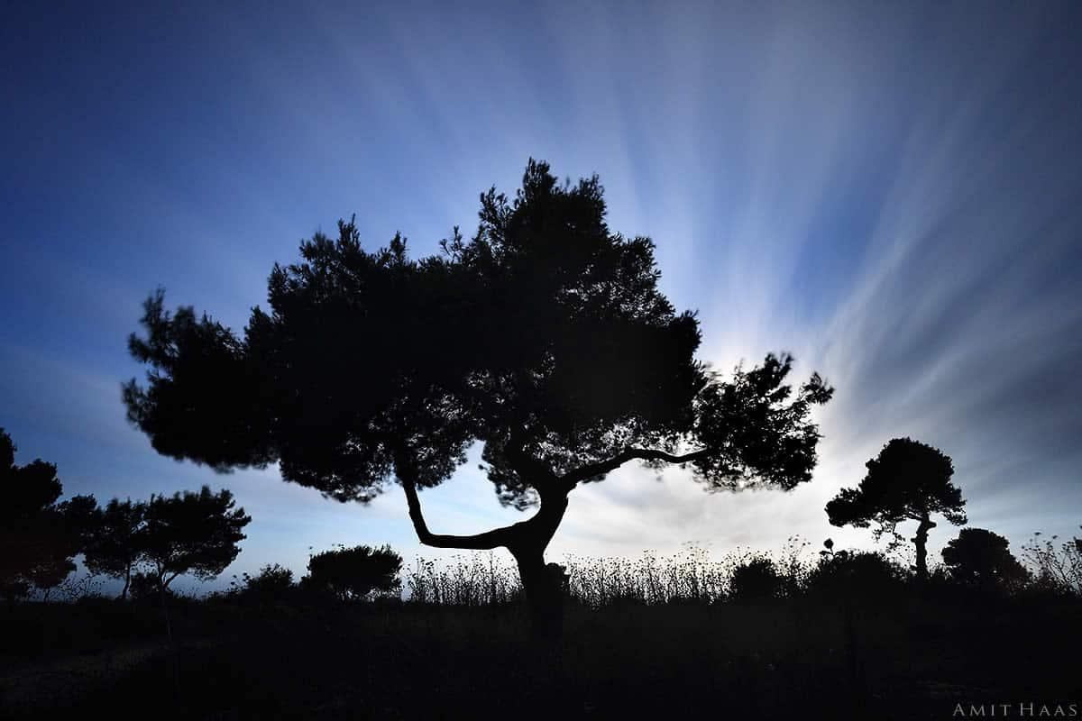 ביער מסתורי ישנו עץ מיוחד הנראה כעץ בונסאי ובשילוב תנועת העננים הנמתחים בשמיים משתלבים בצורתו מדגישים עוצמת העץ. צילום איוריה יחודי לסלון