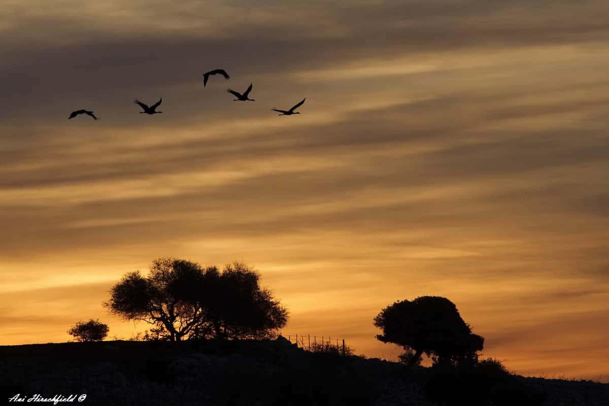 בשעת בוקר מוקדמת יוצאות הציפורים למעופן הראשון בשמיים הנצבעים לאיטם בגוני צהוב וכתום. בעבורן זריחות ושקיעות מסמנות את חילופי הימים ואת חלוף הזמן וכך גם בעבורנו. תמונה בגוונים רכים המעניקה שלווה פסטורלית לסלון בגוונים בהירים