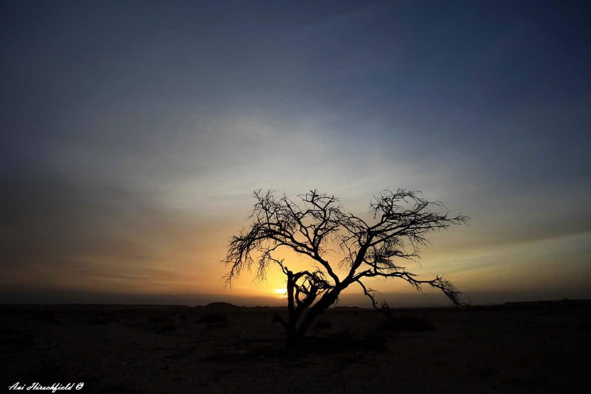 קרני שמש ראשונות חושפות את צלליתו השחורה של עץ בודד. ענפי העץ, שכבר ידעו זריחות ושקיעות רבות, משתרגים אל מול הרקיע שגווניו כתומים וכחולים ומבטיחים פיסה של צל בעוד יום מדברי לוהט. תמונה המעניקה אווירה רומנטית ואינטימית לכל חדר שינה