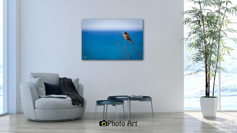 הדמיית תמונת שרקרק ועוד מגוון תמונות טבע מרהיבות