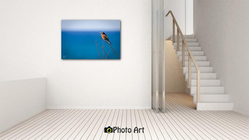 שרקרק בתמונת הדמיה מתוך גלריה תמונות לבית