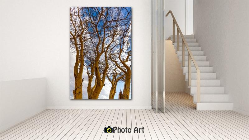 הדמיית תמונת התפצלויות ממבחר תמונות טבע