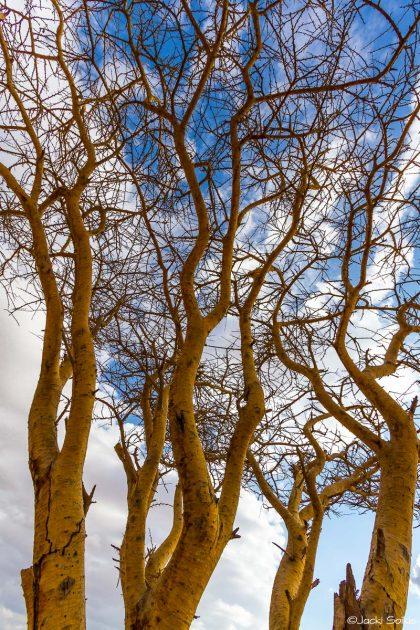 תמונת טבע יפיפיה של התפצלויות ענפי העצים מתוך שלל תמונות לסלון הבית