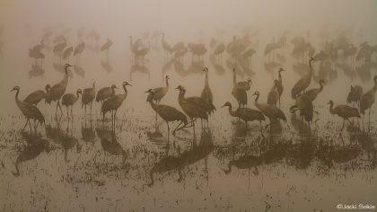 חלום על האגמון, בערפילי הבוקר להקת עגורים מתעוררת לאיטה כציור סוריאליסטי בצבעי אפור ולבן. אניצי העשב יוצרים צורות גיאומטריות שמשתקפות באגם. ייראה נהדר בסלון אקלקטי מודרני בצבעים נועזים וחזקים