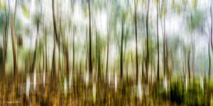 תמונת יער בלעדית לאתר תמונות יפות לבית