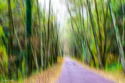 תמונת אבסטרקט של דרך אספלט הנתחמת משני צדיה על ידי עצים בגווני ירוק למיניהם וממשיכה אל תוך האופק תוך יצירת תחושת אינסופיות. תמונה המתאימה לסלון ליצירת אשליית מרחב ופתיחות אל הלא נודע