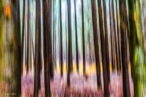 יער בגווני סגול וכחול פסטליים עם נגיעות צהבהב שיחד יוצרים תחושה של מעבר לעולם קסום ומיוחד. תמונת אבסטרקט המתאימה לסלון ליצירת תחושה מיוחדת במינה