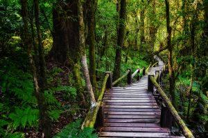 תמונת הגשר המורכב מאסדות עץ . תמונה ממבחר רחב של תמונות קיר לסלון באתר תמונות יפות לבית
