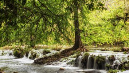תמונת נטוע במים - דוגמה נפלאה של תמונות קיר לסלון מתוך גלריה תמונות טבע