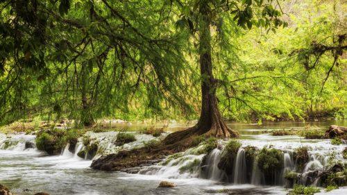 צילום מלא חיים שמצליח ללכוד את תנועת המים השוצפת סביב העץ הדומם הנישא מעלה, בין מים ושמיים. חגיגה של גווני ירוק שתכניס תנועה ועומק לכל סלון ביתי