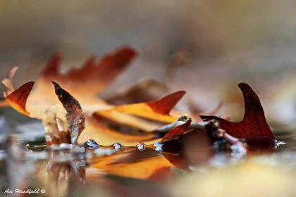 סתיו על פני המים בתמונה נפלאה של סתיו