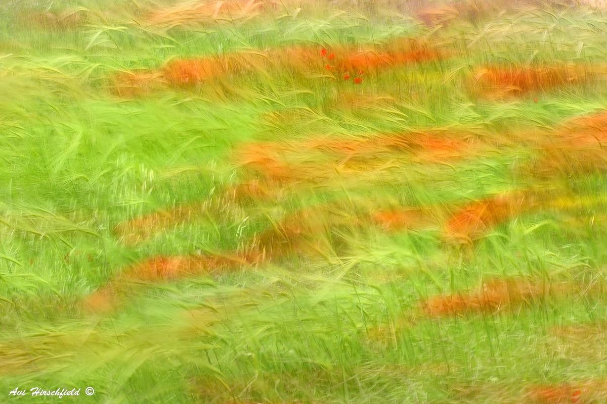 משב רוח מערבל ומכופף עלים ופרחים בשדה רענן. תמונת אבסטרקט מרהיבה בגוונים בהירים של ירוק עם נגיעות אדומות שתשתלב נפלא בסלון או במשרד בעיצוב קלאסי או מודרני בגוונים בהירים