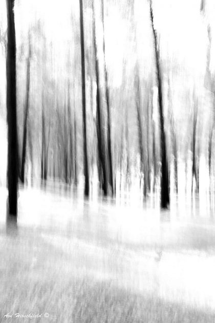 גזעי עצים שחורים מותחים קווים אנכיים לאורכה של תמונת השחור-לבן המהפנטת. כל חומר וכל אפקט שתבחרו להדפסתה יפיקו ממנה תוצאה יפיפיה ומיוחדת והסלון שבו היא תיתלה יקבל מראה דרמטי ומלא עוצמה