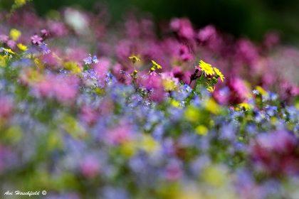 תמונת אביב באוויר ועוד מגוון תמונות לסלון ולשאר חדר הבית