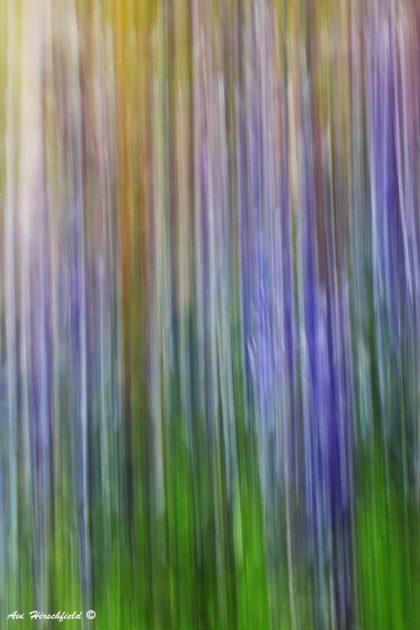 תמונת אבסטרקט ובה שדרת עצים הופכת לחגיגה של פסים בגוונים פסטליים ורכים של ירוק וסגול. תמונה המתאימה לסגנונות עיצוב שונים בחדר השינה או בסלון ותיראה נהדר בהדפסה על זכוכית או על קנבס