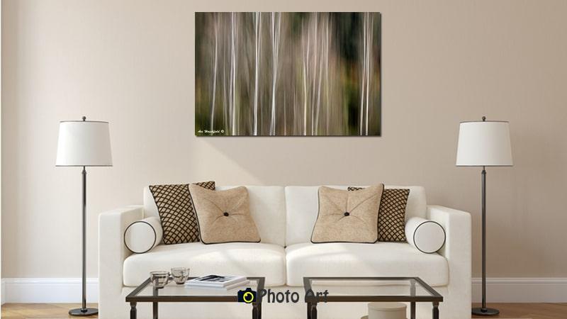 הדמיה של תמונת עצי הצפצפה מתוך מגוון תמונות טבע יפות
