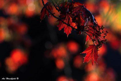 אתר תמונות יפות לבית מציג את תמונת עלי הסתיו הדרמטית ומגוון תמונות של סתיו
