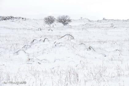 השלג הכבד כיסה את כל הארץ והותיר רק רמזים לנוף המוסתר תחתיו, מלבד צמד עצים הנישאים מעל לשדה הקפוא. תמונה אלגנטית בגוונים של לבן שתיראה נפלא בהדפסה על זכוכית אקרילית