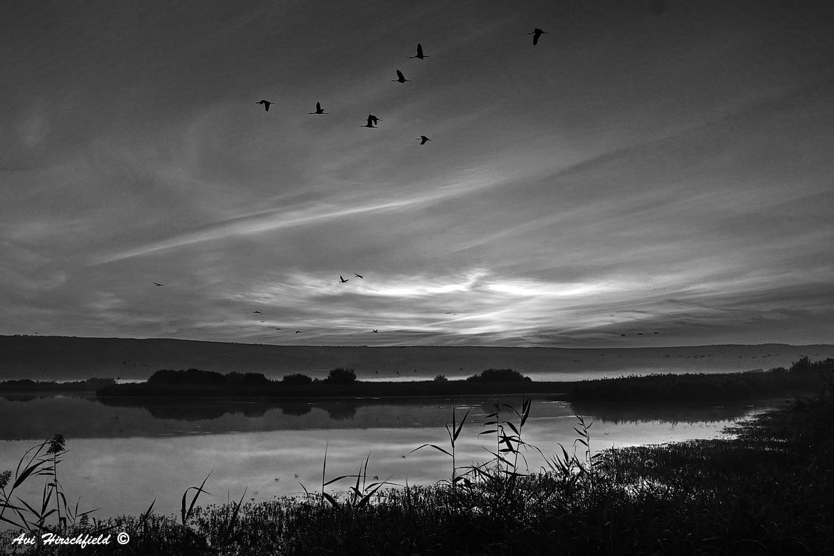 קרני שמש ראשונות מאירות את הרקיע המעונן המשתקף באגמון שתחתיו וציפורים יוצאות למעוף ראשון של בוקר. תמונה יפיפייה ופסטורלית בשחור-לבן שתיראה נפלא בהדפסה על אלומיניום