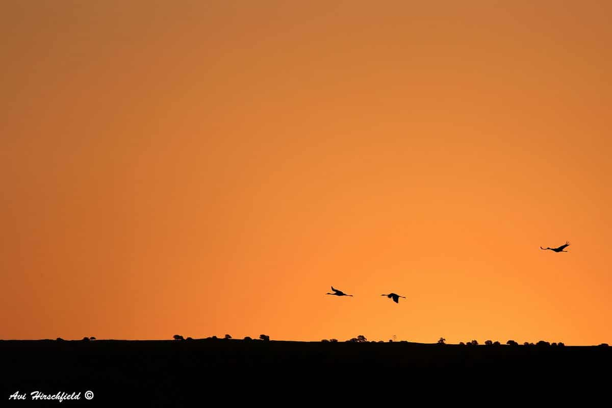 שלוש צלליות שחורות של עופות בר פורשות כנף מעל קו הרקיע שגונו כתום עמוק. תמונה מינימליסטית ומונוכרומטית שתשתלב נהדר בעיצוב הסלון או חדר השינה