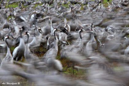 להקת ציפורים גדולה מתאספת על הקרקע למפגש חברתי רועש. תנועת העופות שנלכדה בעדשת המצלמה מזכירה ריקוד פרוע ומכניסה דינמיות רבה לתוך הצילום. מתאים למשרד או לבית