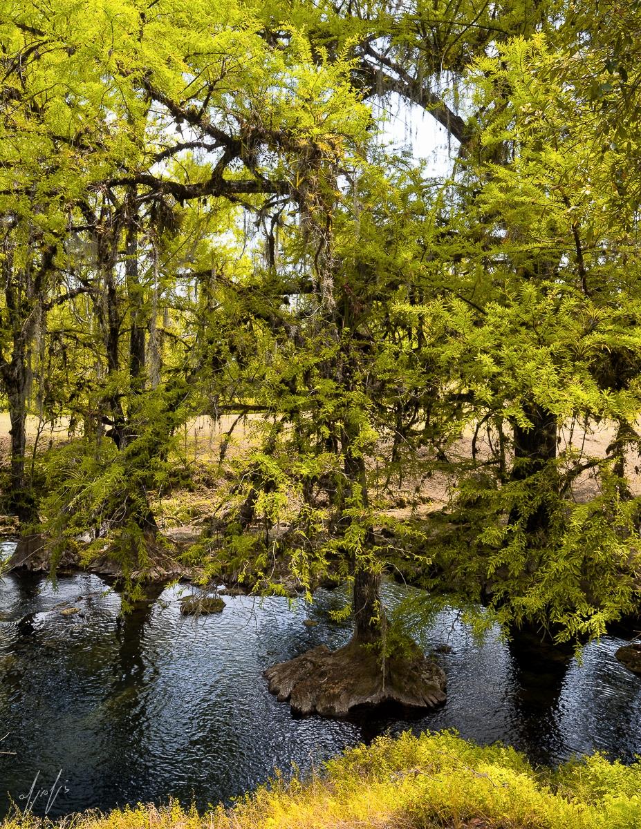תמונה של צמרות עצים מתוך גלריה תמונות קיר לסלון