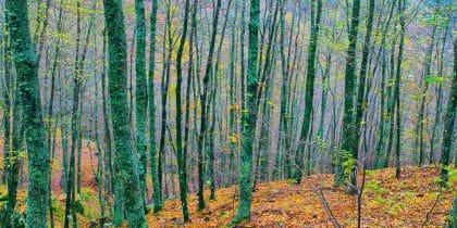 כל צבעי היער מתגלים במלוא יופיים בתמונה זו, ממגוון תמונות יפות לסלון ולחדר השינה באתר התמונות האיכותי ביותר