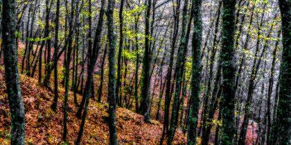 תמונה לסלון ולחדר השינה של אגדת יער עבות בשלל צבעים בוהקים ומרהיבים