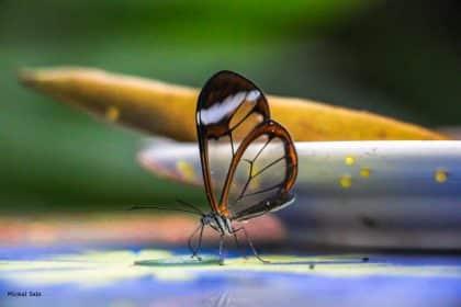 איזה עושר של צבעים - תכלת סגלגל לצד צהוב וירוק ופרפר אחד בעל כנפיים שקופות מנצח על התפאורה המושלמת הזו. כמה רוגע ושלווה. מתאים לסלון, לחדר השינה, לפינת האוכל או לחדר הילדים