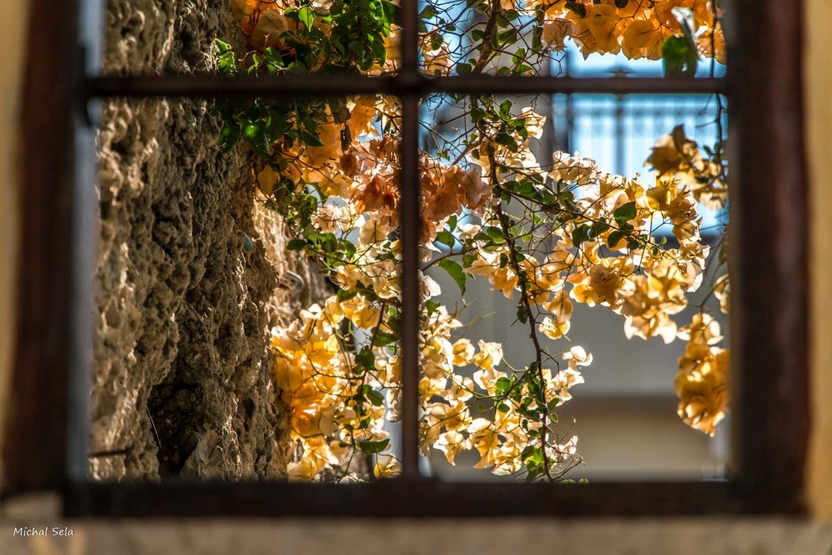 """למי שמחפש להכניס את הטבע הביתה - מבט אל החוץ, לאביב ולפריחה, אל ירוק ותכלת ושקט ושלווה. מתאים לכל חדר שמבקש לעצמו מראה """"טבעי"""""""