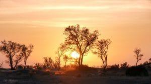 באור החמה השוקעת נצבעים השמיים בכתום-צהוב רך ומשרטטים את צלליתם השחורה של עצי המדבר החזקים. תמונה באווירת שלווה נוגה שתשמש פריט עיצובי משלים לסלון או חדר שינה בגוונים חמים