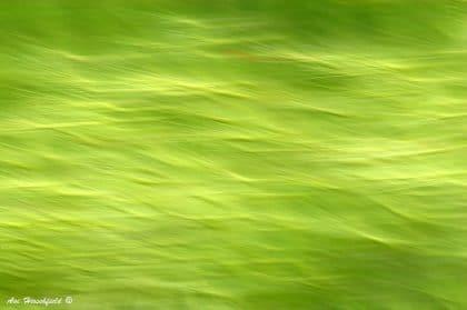 משטח דשא ירוק הופך תחת ידיו של הצלם המוכשר לתמונת אבסטרקט דינמית ומלאת רבדים. בתלייה על קיר הסלון תיצור תמונה זו נקודת עניין המשלימה ומדגישה עיצוב קלאסי או כפרי