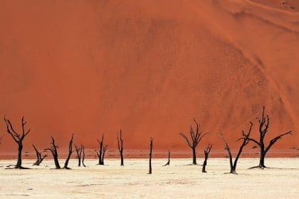 על רקע מדרון חולי כתום של דיונה עצומה בגודלה מזדקרים עצים שחורים מתוך האדמה המדברית הצחיחה. תמונה מרהיבה המשקפת את עוצמתו של הטבע, מתאימה למשרד או לסלון