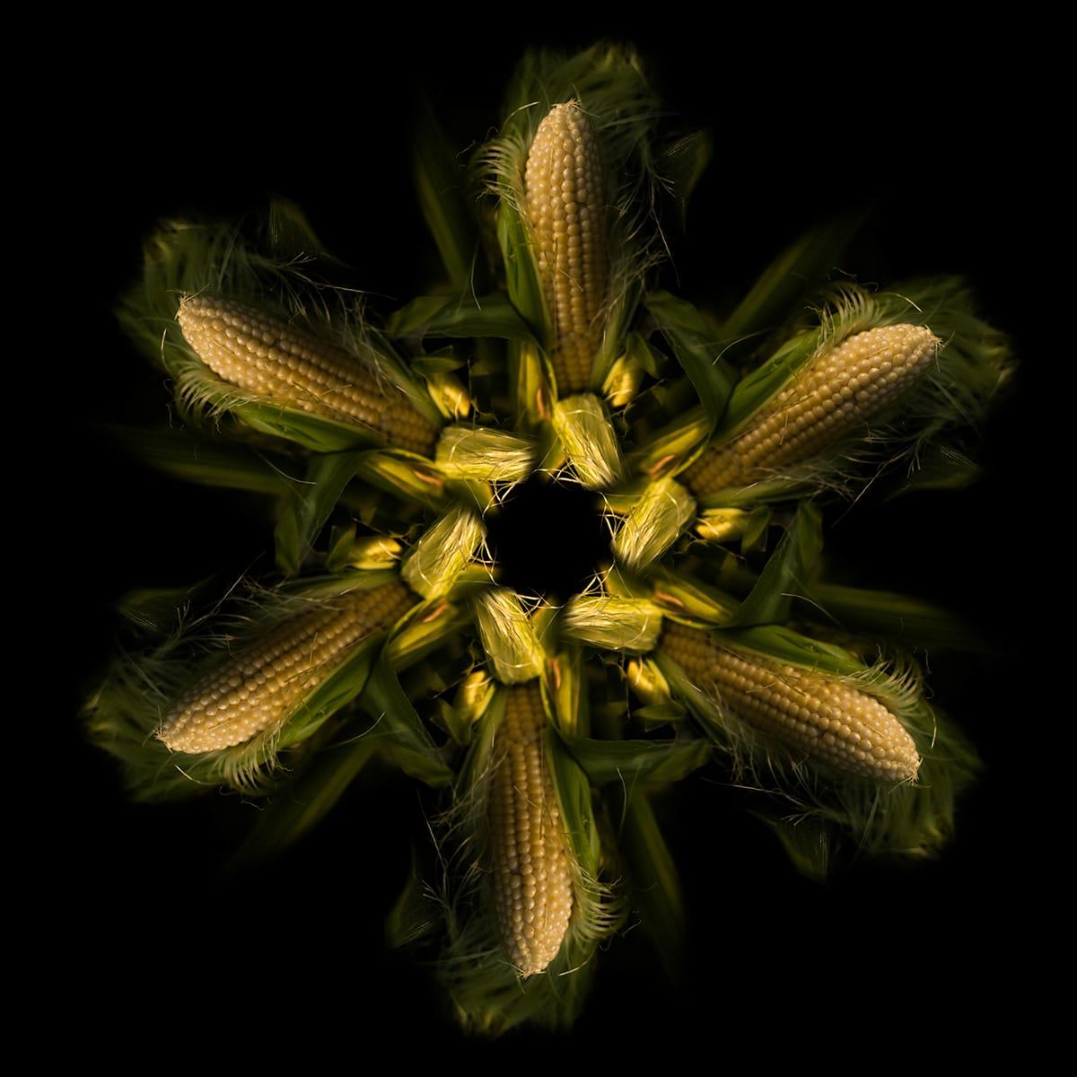 תמונת מנדלת התירס העשויה מקלחים צהובים עטופים בעלים ירוקים ממגוון צילומים למכירה באתר
