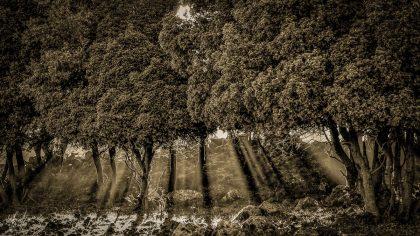 תמונת קרניים מתוך מבחר תמונות שחור לבן באתר