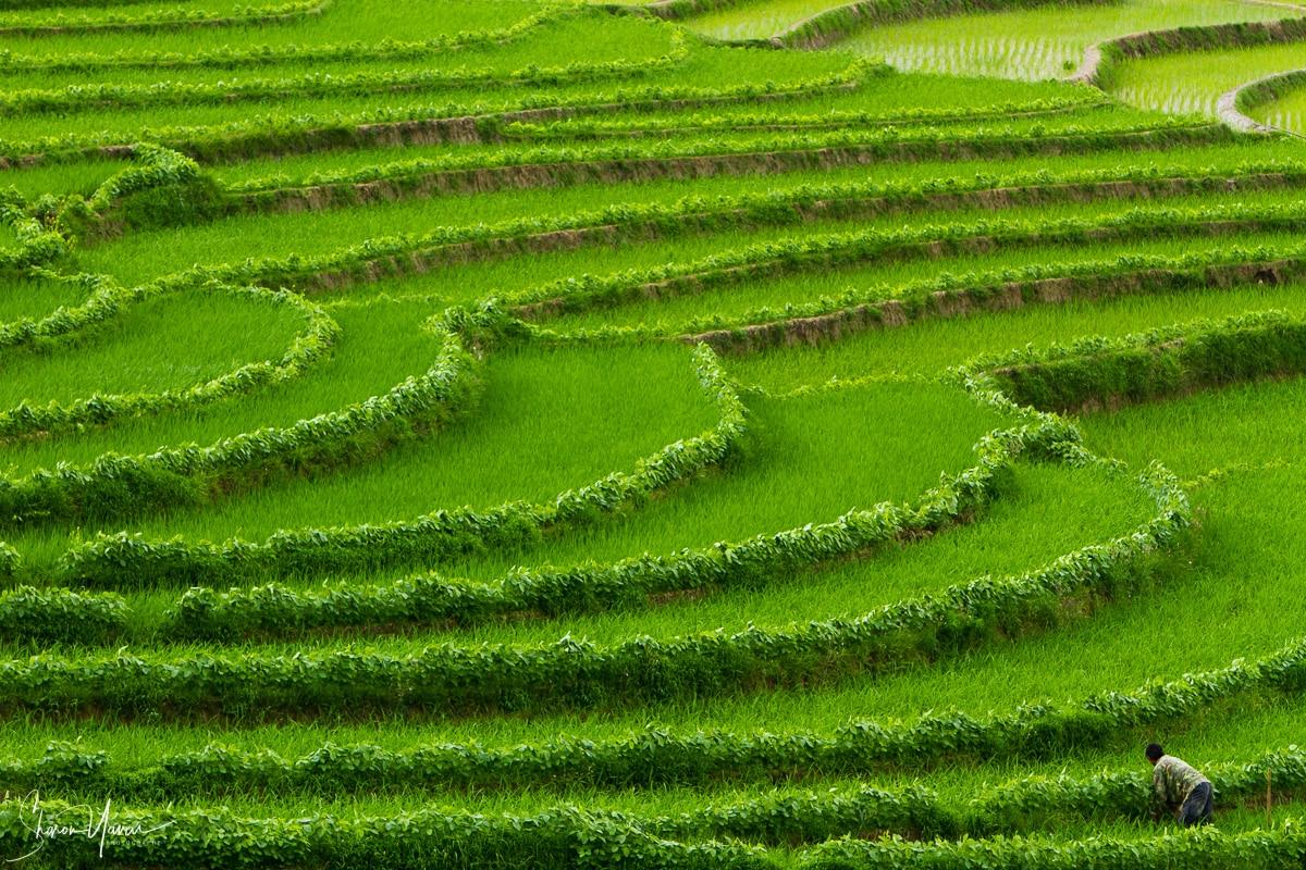 תמונות נוף מרחבי העולם ובהן תמונת טרסות אורז בירוק