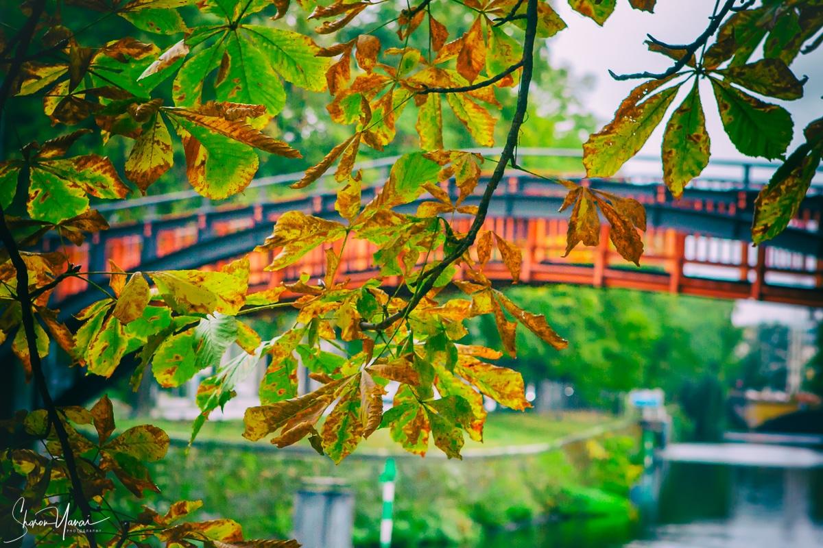 גם בלב העיר אפשר למצוא פינות חמד רומנטיות אם מחפשים אותן. תמונה בגוונים של ירוק לסלון, לחדר השינה ולמשרד