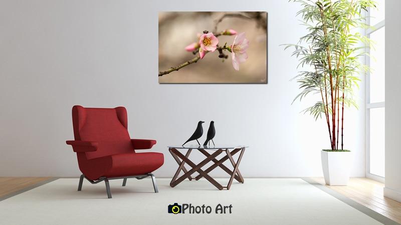 הדמיית תמונת פריחת שקד באור רך ממגוון תמונות מיוחדות לבית