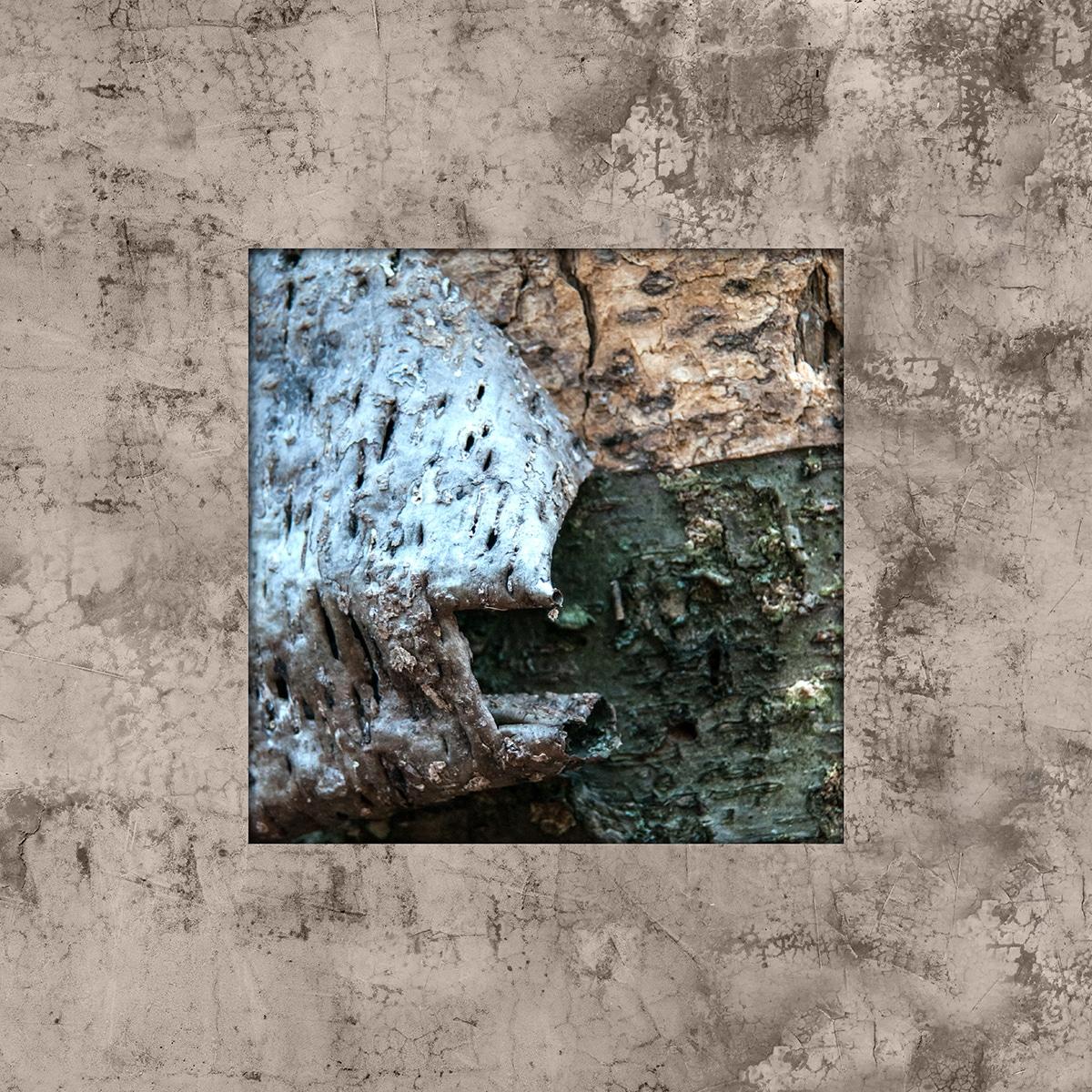 תמונת קליפת העץ השחורה-ירקרקה. תמונה לסלון ולמשרד.