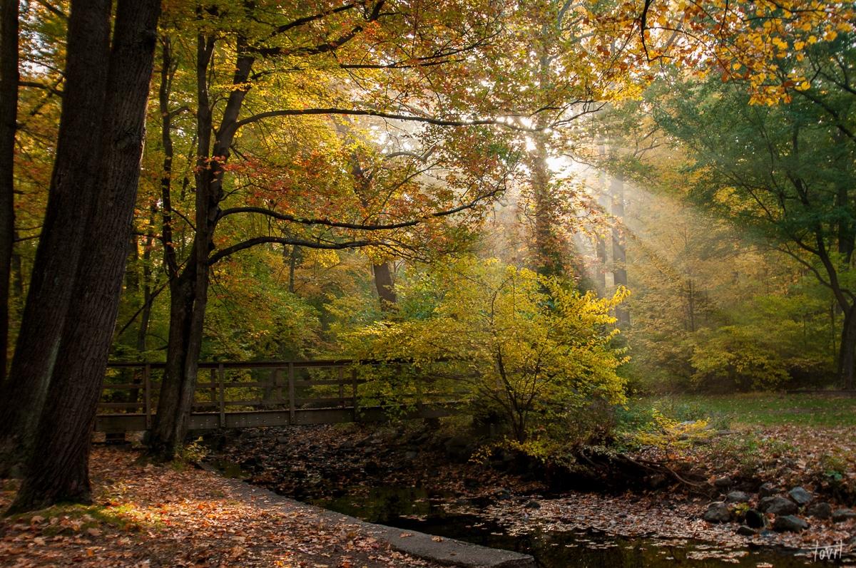 קרני שחר ביער צפוני. תמונה מרגשת ממבחר תמונות לבית באתר תמונות יפות להדפסה
