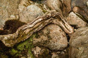 נבוט עץ מוטל בין סלעים חומים נגועים בכיתמי ירוקת על גדות נהר. תמונת טבע אבסטרקטית לסלון ולמשרד.