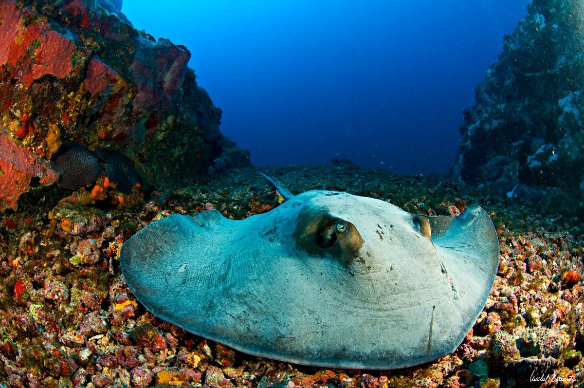 חתול ים בעומק של 42 מטר באיים של פרננדו דה נורוניה, ברזיל.